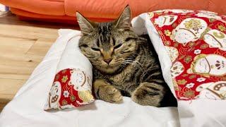 寝ている子猫の目の前でご飯の準備を始めてみた結果w