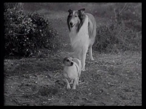 "Lassie - Episode 144 - ""The Storm"" - Season 5, Episode 1 (09/07/1958)"