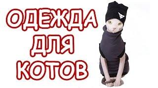 костюм для кота|мода для котов|одежда для котов|смешные коты|смешные кошки|коты видео про кошек