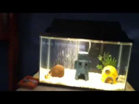 The best spongebob aquarium doovi for Spongebob fish tank