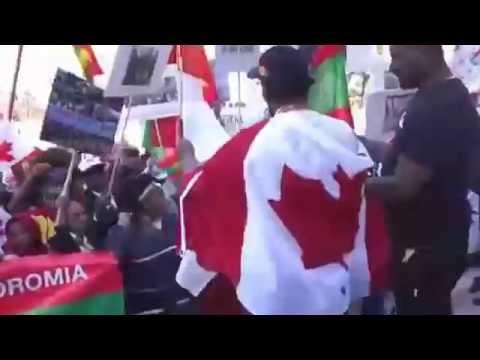 ▶ Galaanaa Gaaromsaa Yololes Haqa Qaba Oromo Oromia