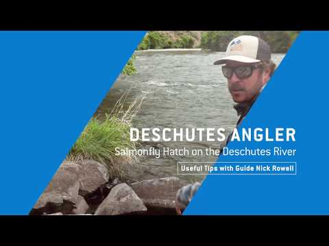 DESCHUTES RIVER SALMONFLY HATCH - Useful Tips With Guide Nick Rowell