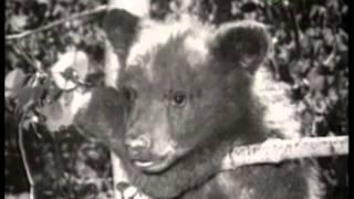 ANIMAL LEGENDS-3