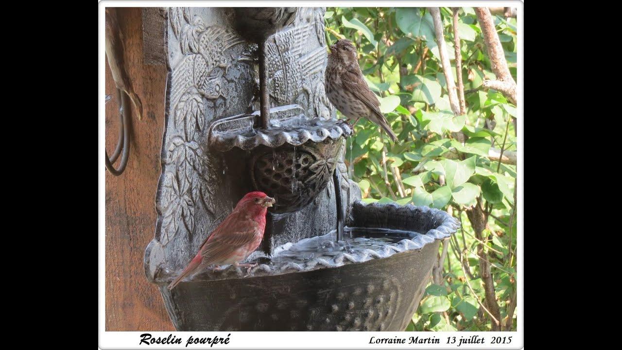 bassin d eau pour oiseaux