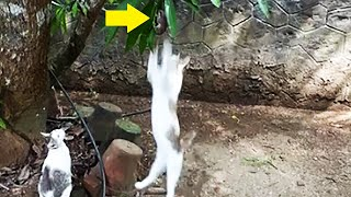Mouse desperately trying to escape from cats but failed !