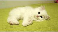 живые картинки гифы с маленькими котятами наше время