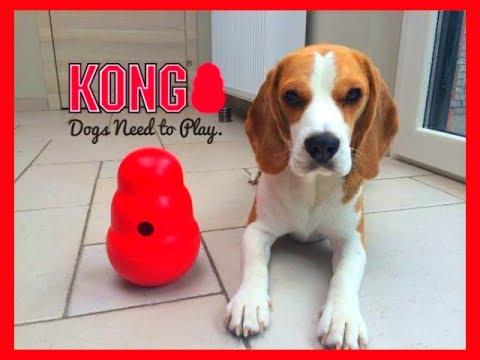 "Dog Toy Critic ""Louie The Beagle "" Episode #2 : KONG WOBBLER"