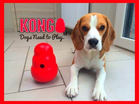 BEST DOG TOY EVER? 'KONG WOBBLER' With Funny Dog Toy Critic Louie The Beagle