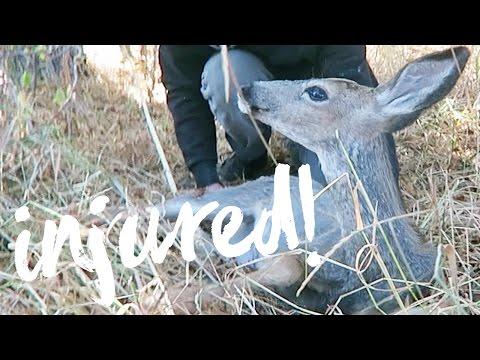 Baby Deer Rescue!