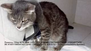 Крик о помощи бездомный кот из приюта Дари добро | клиника Бэст уретростомия