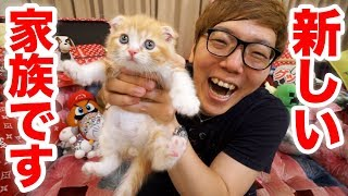 [Report] I got a new family! I'm gonna keep a cat! [Hikakin TV] [Cat]