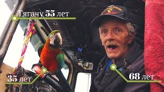 Old trucker and a parrot on a 1962 Kenworth truck
