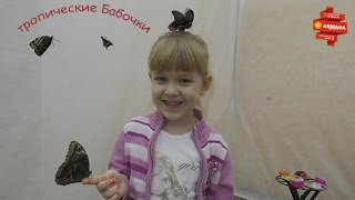 Посещение выставки Тропических бабочек. Мегамолл АРМАДА г.Оренбург.