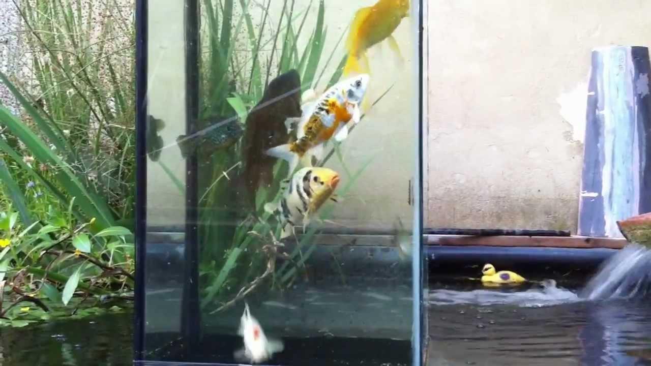 Fabriquer Une Tour A Poisson mes poissons dans une tour de verre.img_3390.mov