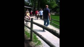 Fort Wayne's childrens zoo pony ride