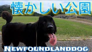 NewfoundlanddogBOSS君   久しぶりに広い公園にきたよ   最近は雨ばっか...
