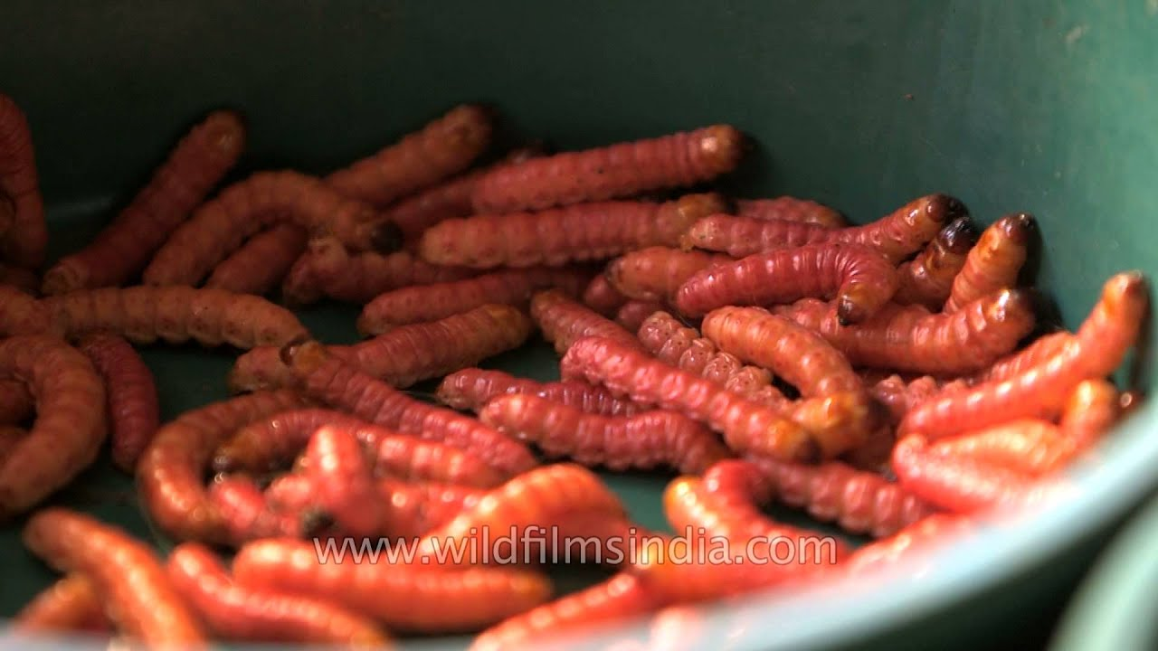 Wonderful Edible Worms For Eating In A Local Market In India   YouTube