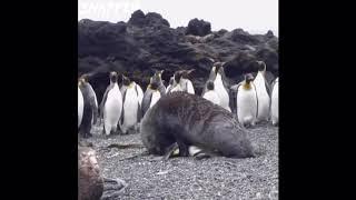 Popular Penguin Blast  Related to Games