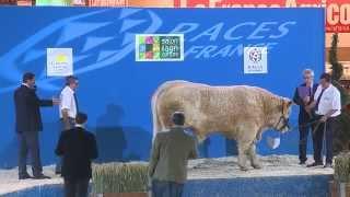 Concours race Charolaise (1/3)