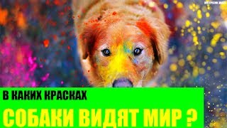 В каких красках собаки видят Мир?