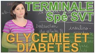 Glycémie et diabètes - Spé SVT - Terminale - Les Bons Profs