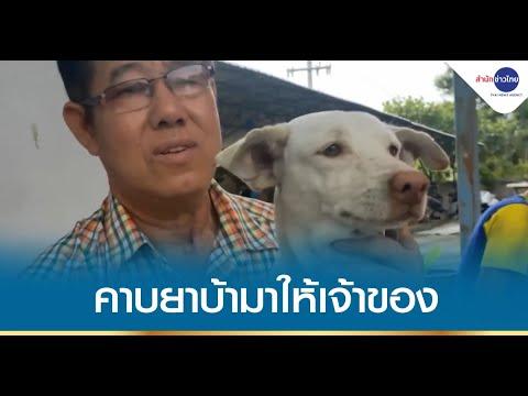 สุนัขแสนรู้คาบถุงยาบ้ามาให้เจ้าของแจ้งตำรวจ