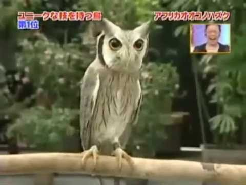 transformer owl youtube