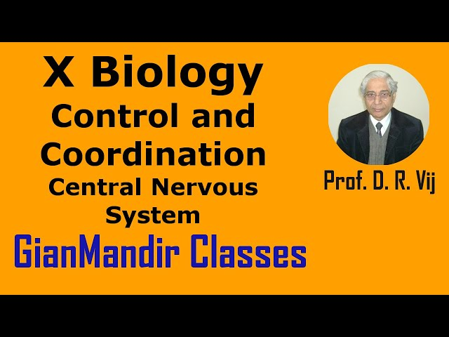 X Biology | Control and Coordination | Central Nervous System by Manjit Ma'am
