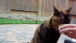 Clicker Training Cats - Target Stick