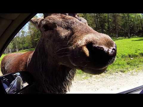 Omega Park wildlife of Canada! Montebello, Quebec, Canada