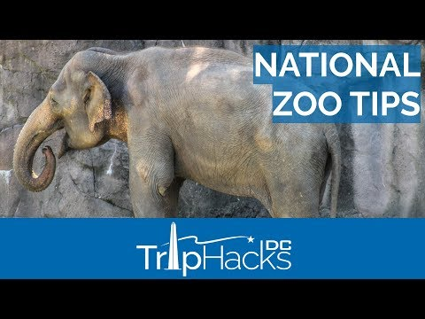 Top Tips for Visiting the National Zoo in DC