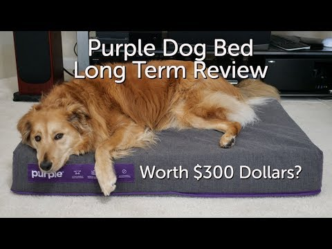 purple-dog-bed-long-term-review.-is-it-worth-it?