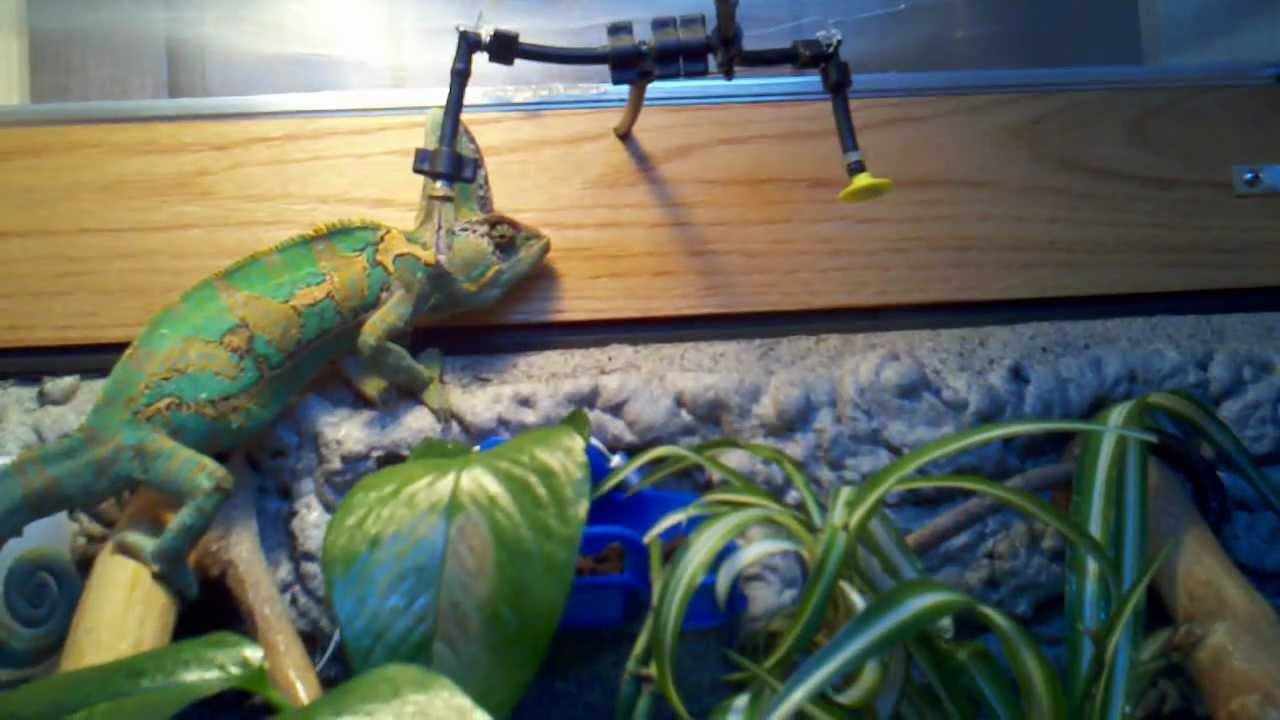 Homemade Misting System For Chameleons Youtube