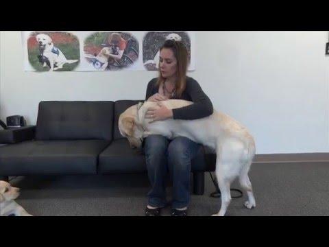 Self Harm Service Dog Training