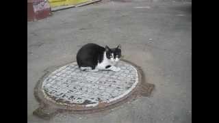 Котик мур котик