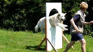 North Norfolk Dog Training Acadamy