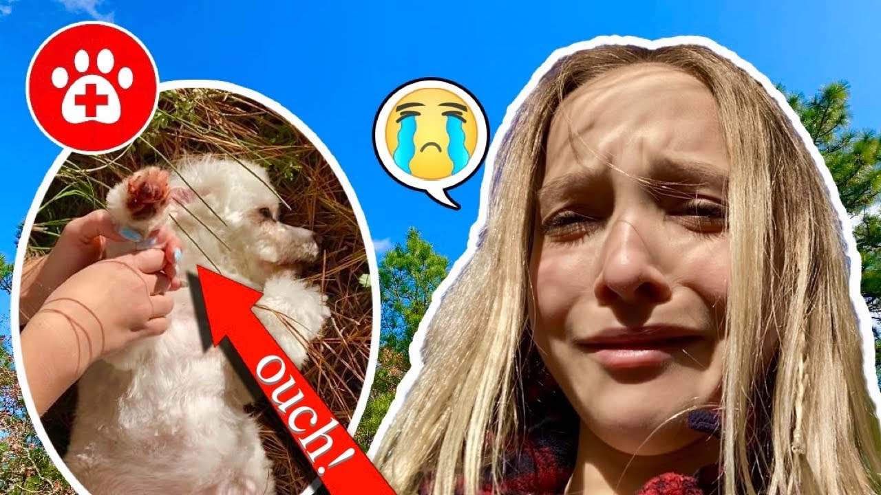 SOMETHING TERRIBLE HAPPENED TO MY DOG TOBY!! **I CRIED!** SO EMOTIONAL!! #lostdog #lillyK