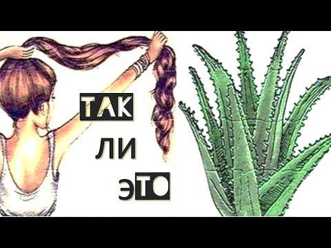 aloe vera противопоказания алоэ вера польза или вред