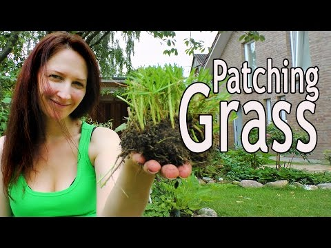 Grass: How to patch your lawn