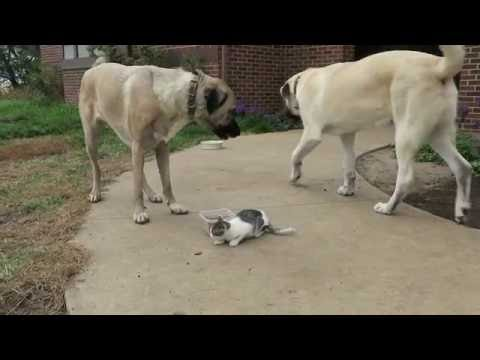 Buddy doesn't think cat should eat Boomer's breakfast.