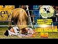 Video de Huichapan