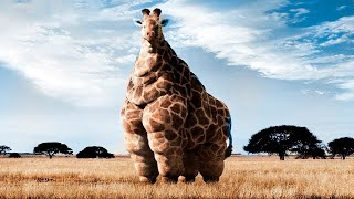 Такого Вы Ещё не Видели! Самые Толстые Животные в Мире