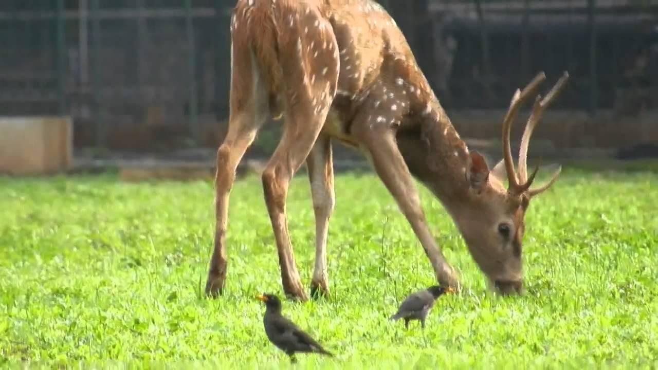 deer symbiotic relationship