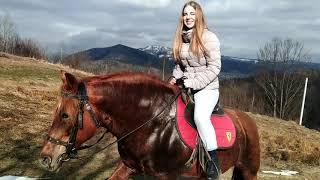@Коні Яремче. Підйом на Вершину. коні в милі!