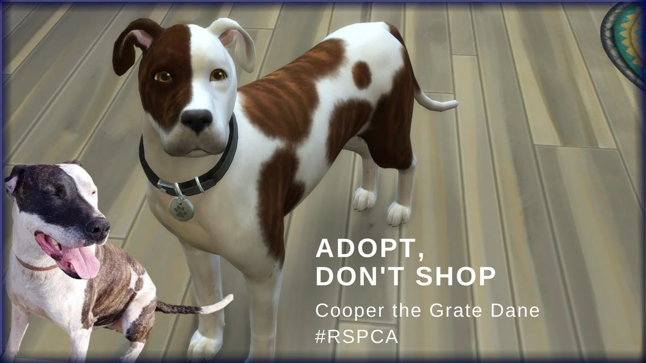 Cooper #RSPCA