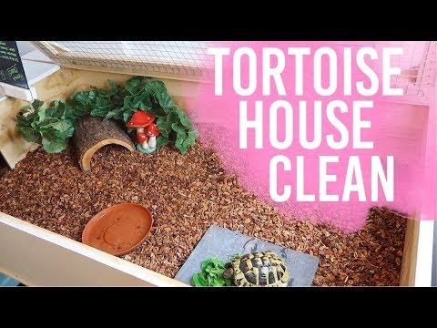 Cleaning My Tortoise Enclosure & Setup