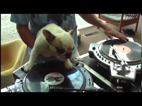 SO CUTE!! WHAT A SMART DOG!! Amazing DJ Dog!