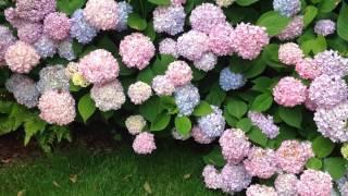 Красивый сад. Ландшафтный дизайн.mp4