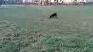 Mała na boisku