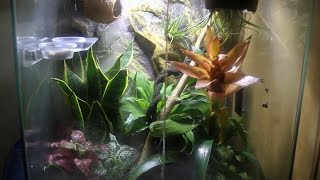 Natural Living Terrarium For My Crested Gecko!